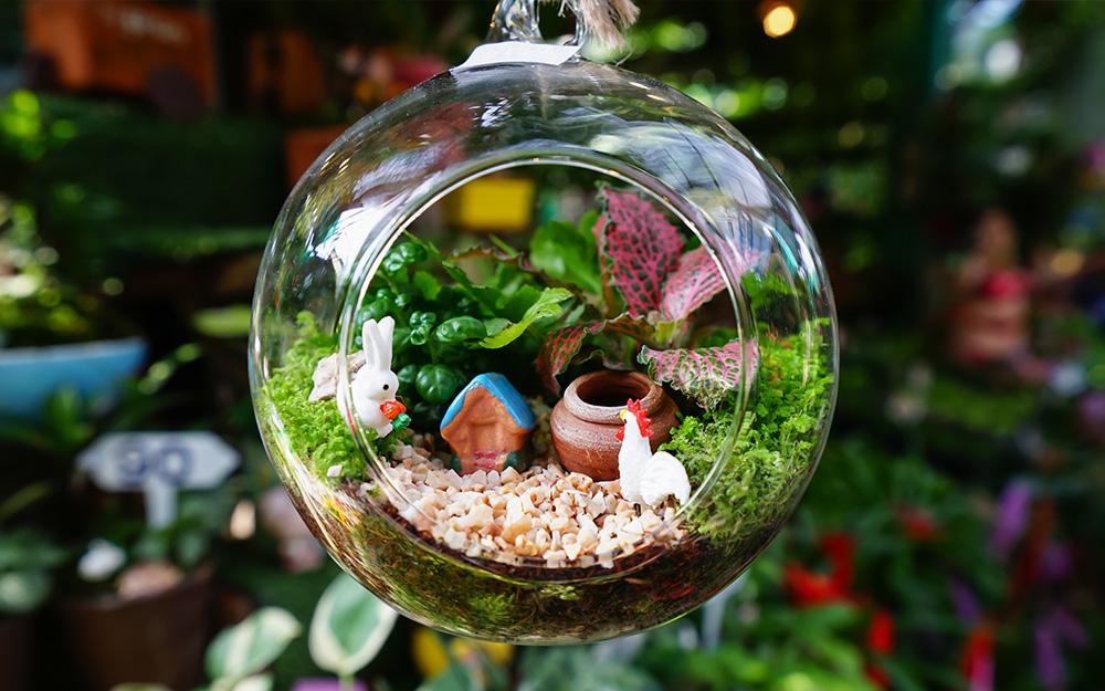 créer un jardin miniature original