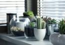 décorer maison plantes